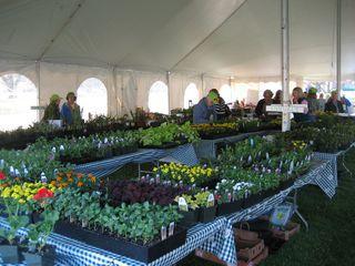 Garden Sale & Debby's Garden 001