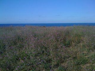 Cape Cod Day 023