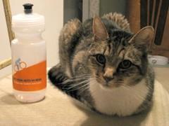 Cats_knitting_lilacs_004a